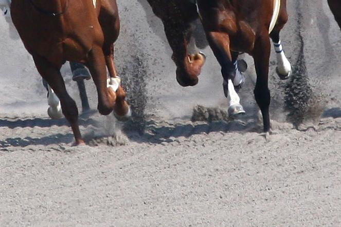 競争馬購入品3.jpg
